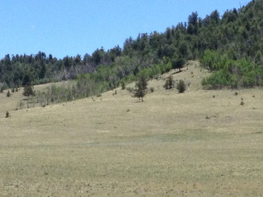 buy mountain land in co