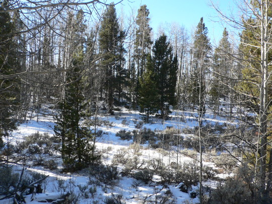 mountain land for sale