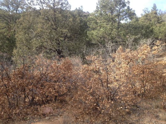 Land For Sale Colorado Springs >> Fremont County Acreage Colorado Forest Land For Sale